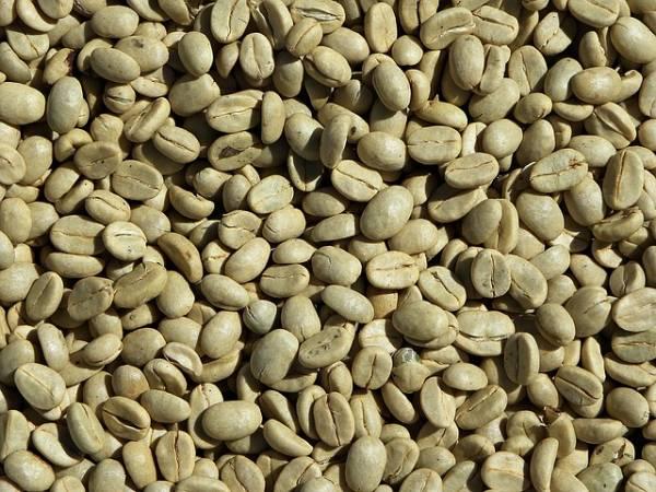 لاغری در کوتاه ترین زمان با قهوه سبز